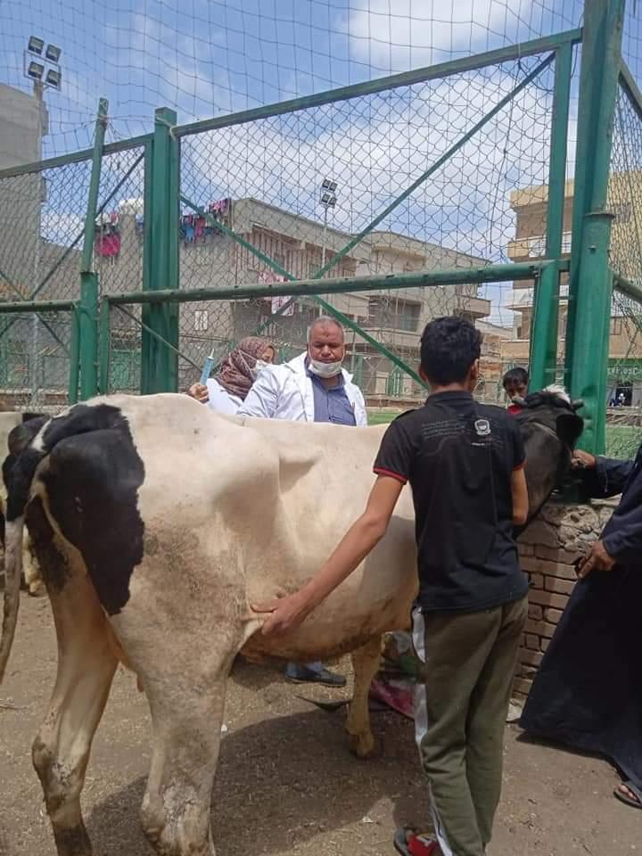 نحصين الماشية
