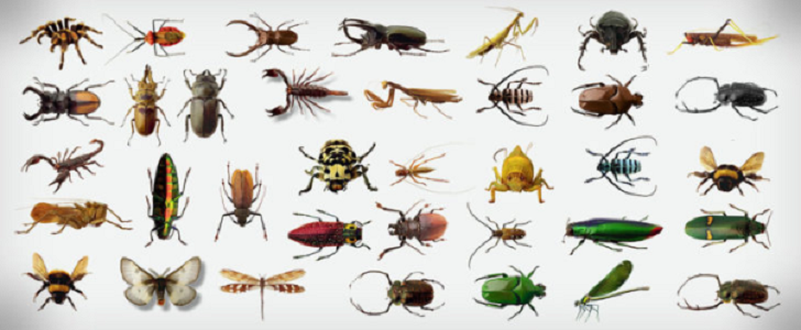 الحشرات الغير سامة