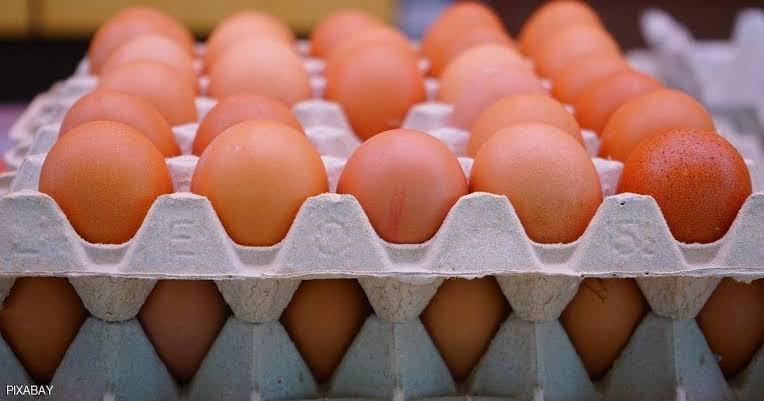 أسعار كرتونة البيض اليوم الثلاثاء 26- 10-2021